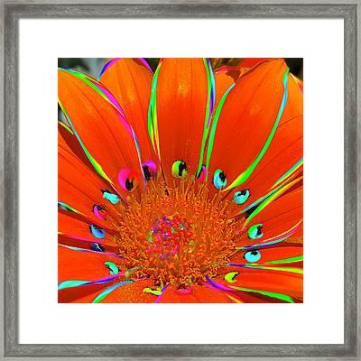 Deep Coral Bloom  Framed Print
