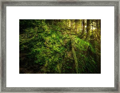 Framed Print featuring the photograph Deep In The Forests Of Bavaria by David Morefield