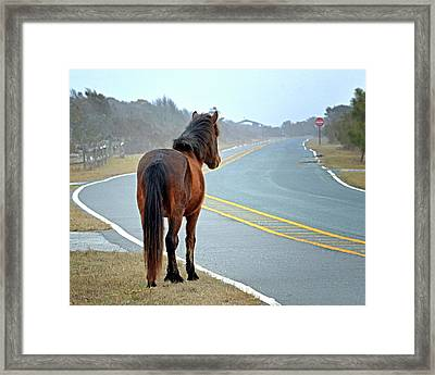 Framed Print featuring the photograph Delegate's Pride Awaiting Tourists On Assateague Island by Bill Swartwout Fine Art Photography