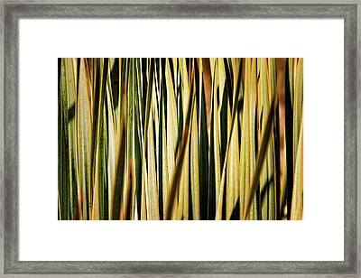 Framed Print featuring the photograph Desert Grasses I by Leda Robertson