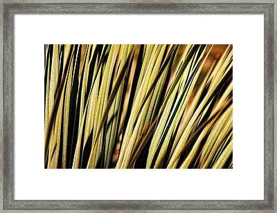 Framed Print featuring the photograph Desert Grasses II by Leda Robertson