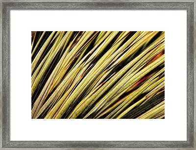 Framed Print featuring the photograph Desert Grasses IIi by Leda Robertson