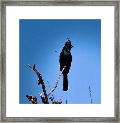 Desert Phainopepla And Dragonfly Framed Print
