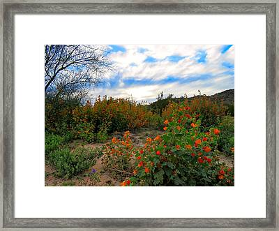 Desert Wildflowers In The Valley Framed Print