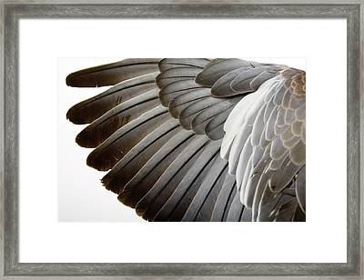 Detail Of A Wing Framed Print by Grafissimo