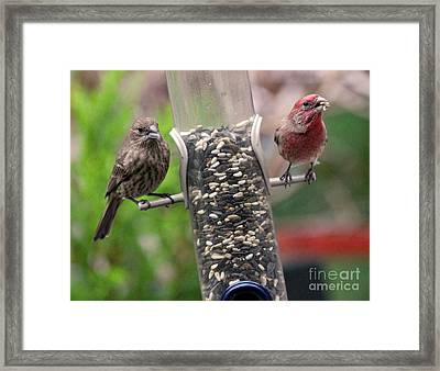 Framed Print featuring the photograph Dinner For Two by Patricia Youngquist