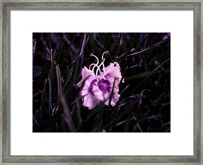 Discarded Beauty Framed Print