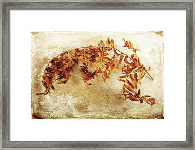 Framed Print featuring the photograph Disorderly Order by Randi Grace Nilsberg