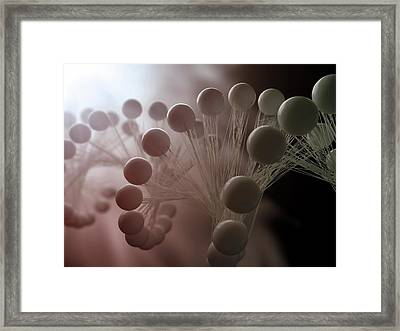 Dna Molecule, Artwork Framed Print by Science Photo Library - Andrzej Wojcicki