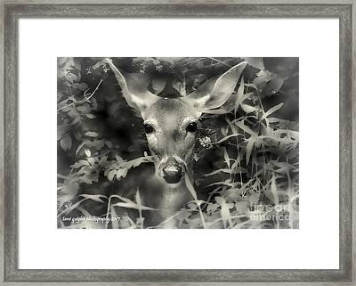 Doe's Summer Portrait Framed Print