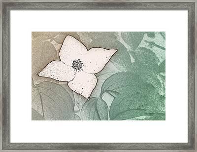 Dogwood Flower Stencil On Sandstone Framed Print
