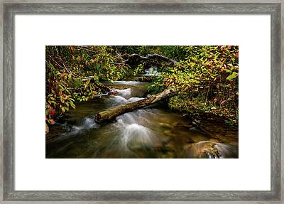 Framed Print featuring the photograph Dogwoods Along The Provo Deer Creek by TL Mair