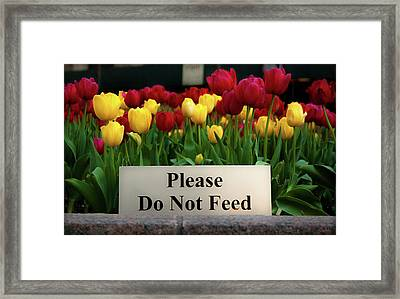 Dont Feed The Tulips Framed Print