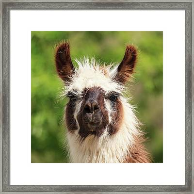Don't Hate Me Because I'm Beautiful Framed Print