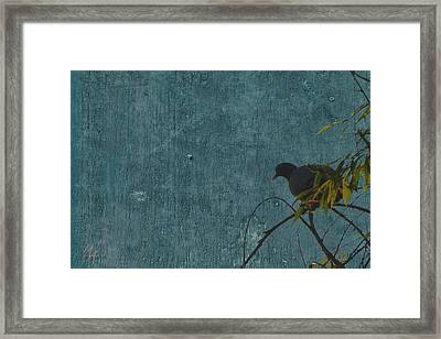 Framed Print featuring the photograph Dove In Blue by Attila Meszlenyi
