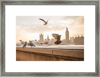 Doves And Seagulls Over The Thames In London Framed Print