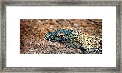 Dragon With No Fire Framed Print