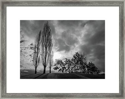 Dramatic Fall Trees Framed Print