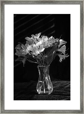 Dramatic Flowers-bw Framed Print