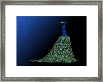 Framed Print featuring the photograph Dressed To Party - Male Peacock by Debi Dalio