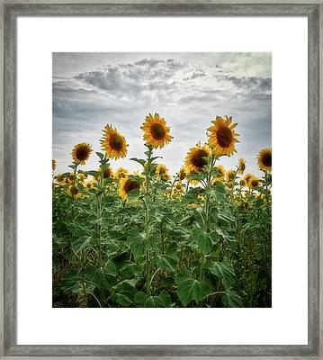 Framed Print featuring the photograph Dressing To Sunlight. Horytsya, 2014. by Andriy Maykovskyi