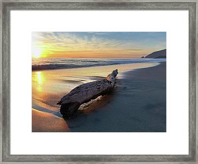 Drift Wood At Sunset II Framed Print