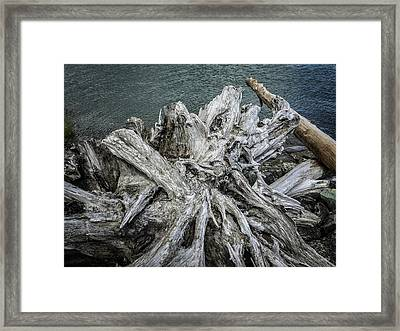 Framed Print featuring the photograph Driftwood by Mark Duehmig