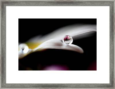 Drop On Petal Framed Print by Makieni's Photo