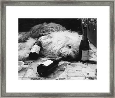 Dulux Dog Drunk Framed Print by Michael Webb