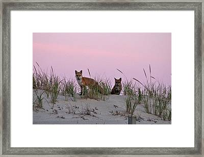 Framed Print featuring the photograph Dune Foxes by Robert Banach