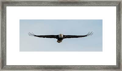 Eagle Flying At You Framed Print