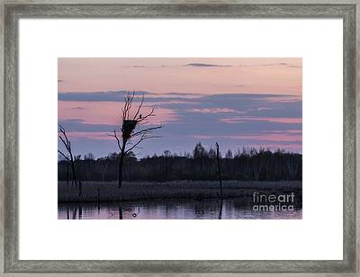 Eagle Sunset Framed Print