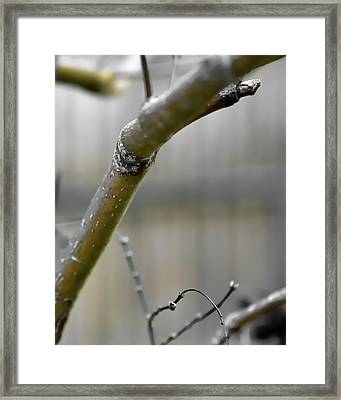 Framed Print featuring the photograph Early Winter Branch by Jerry Sodorff