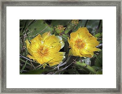 Framed Print featuring the photograph Eastern Prickley Pear Cactus Flower On Assateague Island by Bill Swartwout Fine Art Photography
