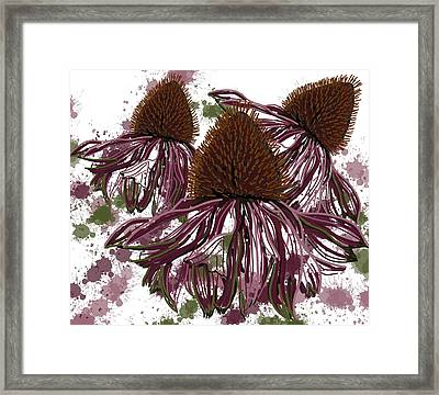 Echinacea Flowers Line Framed Print