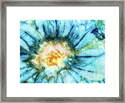 Eco Dyed Cosmos Framed Print