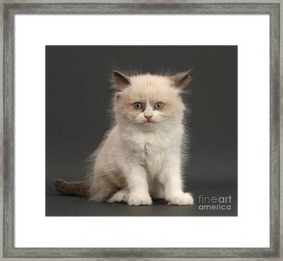 Framed Print featuring the photograph Electric Kitten by Warren Photographic