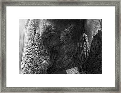 Elephant Framed Print by Andrew Dernie