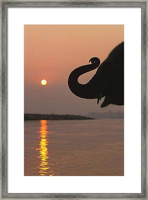 Elephant, Chitwan National Park, Nepal Framed Print by Design Pics / Sean White