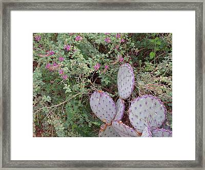 Framed Print featuring the photograph Ensconced Prickly Pear 5 by Lynda Lehmann