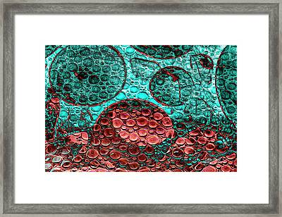 Epidemiology Framed Print