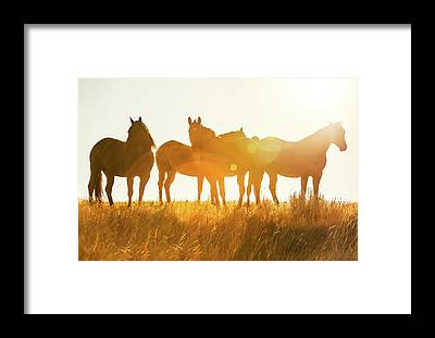 Herd Of Horses Framed Prints