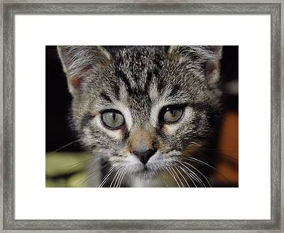 Esme Framed Print by JAMART Photography