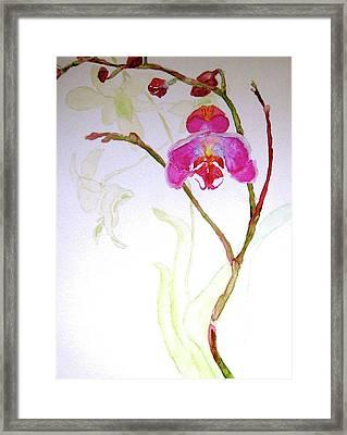 Exotic Dancer Framed Print