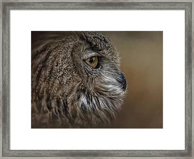 Eye Of Wisdom  Framed Print