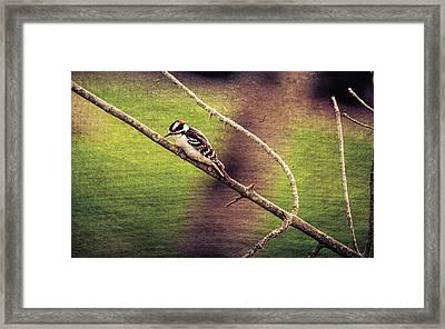 Faded Canvas Woodpecker Framed Print