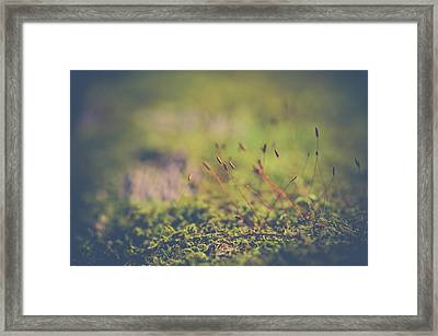 Framed Print featuring the photograph Fairy Hunt by Michelle Wermuth