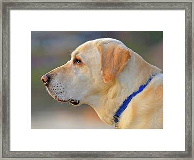 Faithful Framed Print