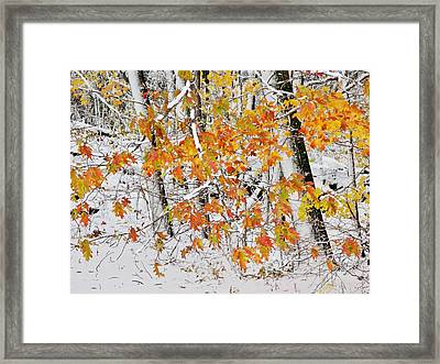 Fall And Snow Framed Print