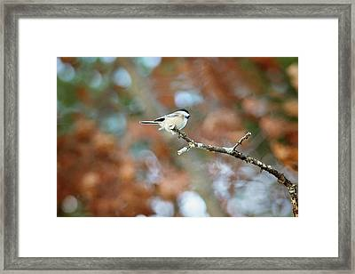 Framed Print featuring the photograph Fall Chickadee by Sue Collura